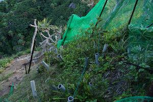 ムニンツツジ植栽地のネット