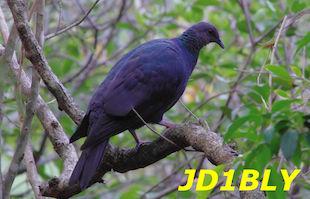 JD1BLY QSL
